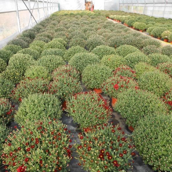 Nos Plantes exterieurs ou intérieurs pour toute occassion